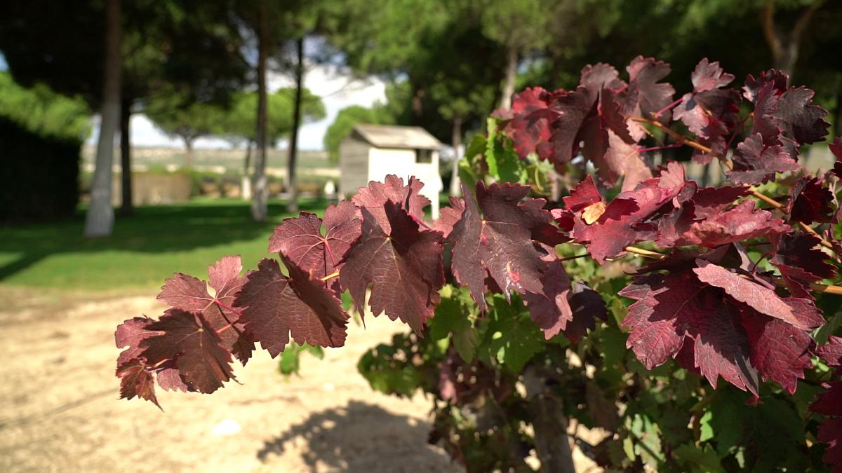 Ribera Duero otoño